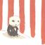Аватар для penguinboy