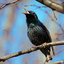 Аватар для sancho-starling