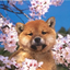 Аватар для furiipu