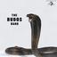 The Budos Band - The Budos Band III album artwork