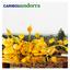 Caribou - Andorra album artwork