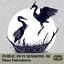 Dana Falconberry - Public Hi-Fi Sessions 02 album artwork