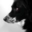 Аватар для panterrranight
