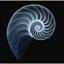 Avatar de Surfthespiral