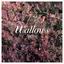 Wallows - Spring album artwork
