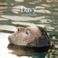 Coconut Records - Davy album artwork