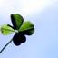 Avatar for clover93