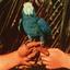 Andrew Bird - Are You Serious album artwork