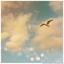 Аватар для DeltaDream