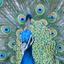 Avatar for nartw