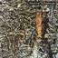 Siouxsie & The Banshees - Juju album artwork