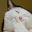 Аватар для GatitoUbary