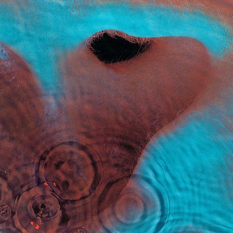 Pink Floyd - Meddle (CD, Album, Reissue) | Discogs |Pink Floyd Meddle