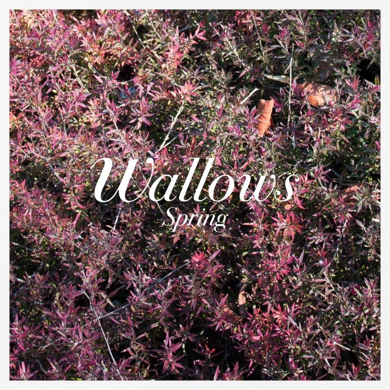 Wallows Spring Ep Artwork 1 Of 2 Last Fm