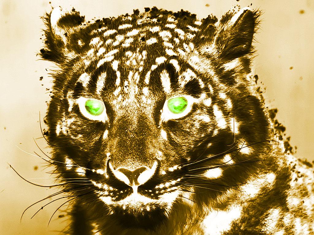 Картинки огненного тигра