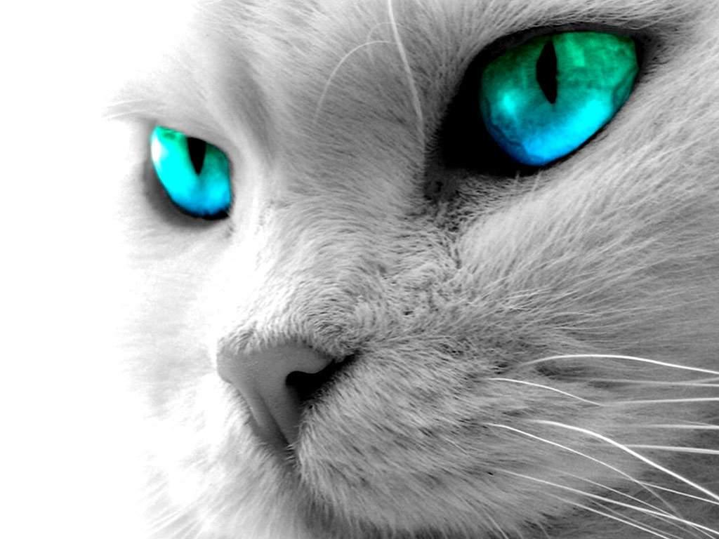 картинки аватарки белый кот скачать распечатать любое