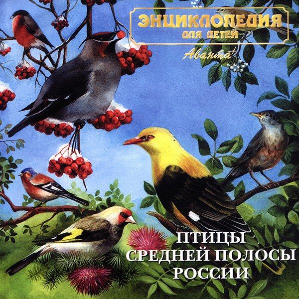 фото и голоса птиц средней полосы россии с названиями