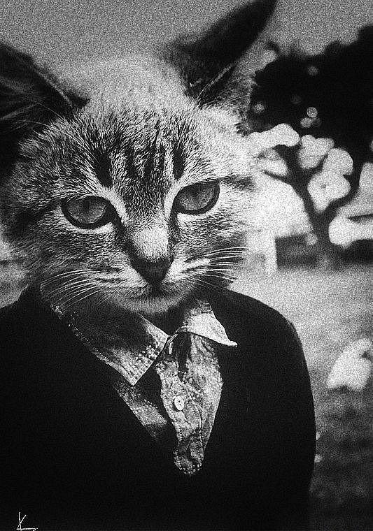 фотки котиков на аву в скайпе для пацанов вроде они