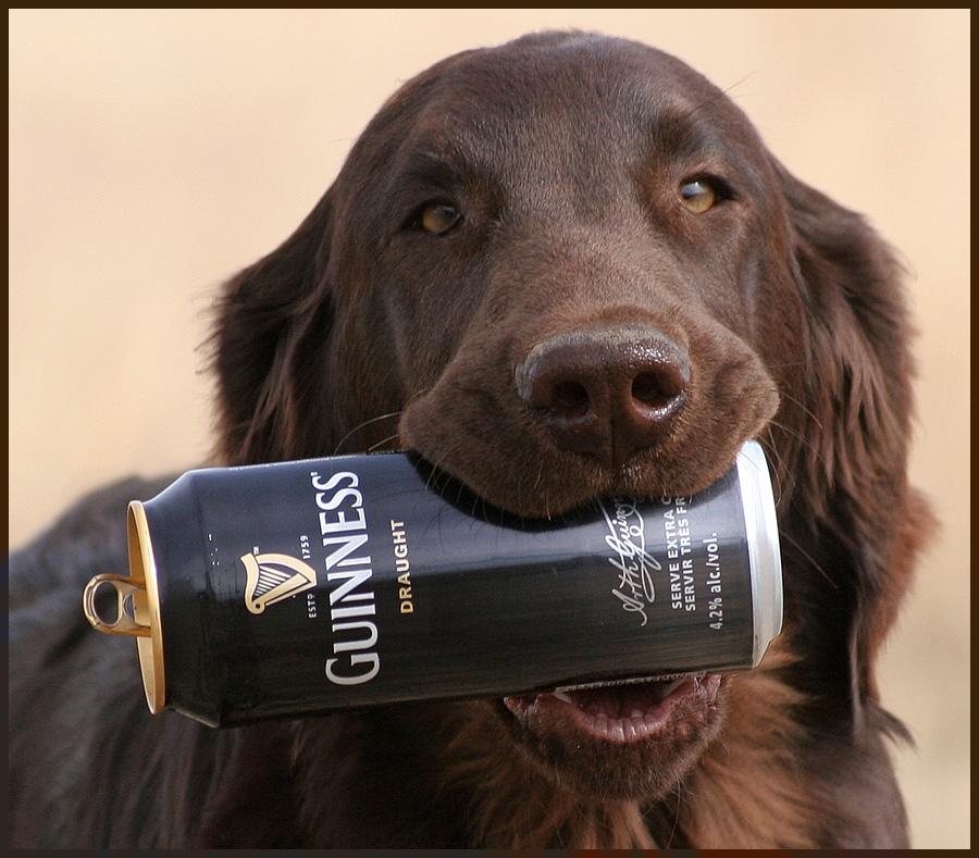 Собака с бутылкой картинки