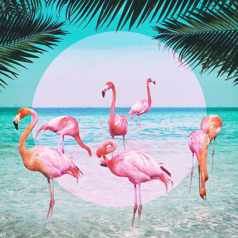 картинка с фламинго на голубом фоне думали, что женщин