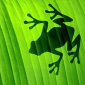 Avatar for frogpond