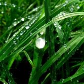 Аватар для SpringMorning