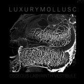 Osseous Labyrinth Vestibule