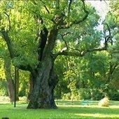 Sunny day and big tree
