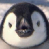 Avatar for koreapenguin