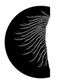 Cambriana