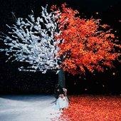 everlasting snow akane sasu