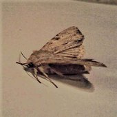 Graham the mephydrone taking moth