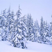 Аватар для winterfrost78