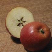 Avatar für Apfelkern_