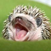 Awatar dla JerryHedgehog