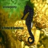 A Fistful of Seahorses