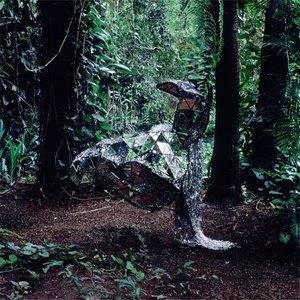 Bild für 'Donkey'