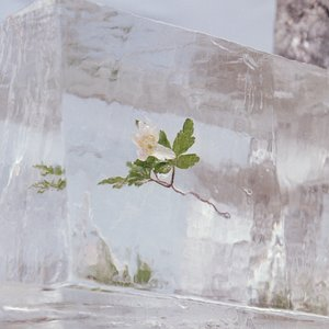 Image for 'Windflowers'