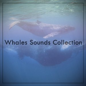 Image for 'Whales Sounds Collection'
