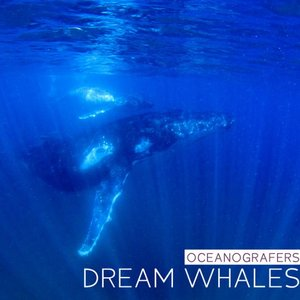 Image for 'Dream Whales'