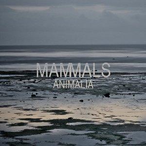 Image for 'Animalia'