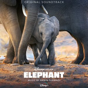 Zdjęcia dla 'Elephant'