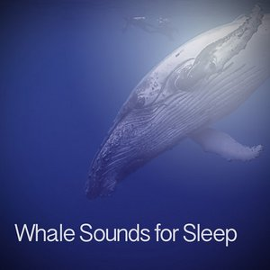 Image for 'Whale Sounds for Sleep'