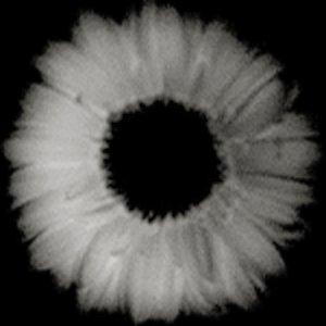 Image for 'kodomodamashi'