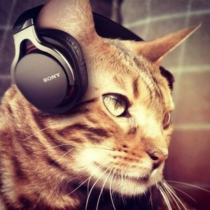 Image for 'CAT MUSIC'