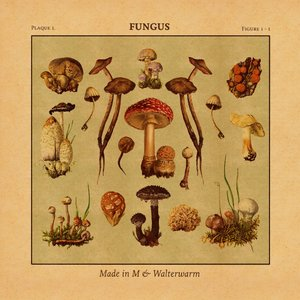Image for 'Fungus'