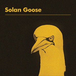 Image for 'Solan Goose'
