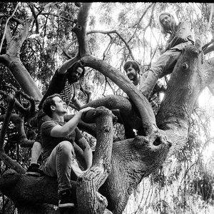 Image for 'Elephant Tree'
