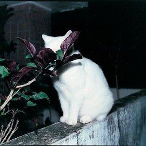 '東京カラー'の画像