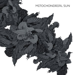Image for 'Mitochondrial Sun'